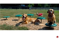Picture of Bark Park Stepping Paws, Outdoor Dog Exercise